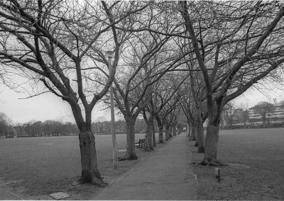Black & White Photograph, Walk Meadows
