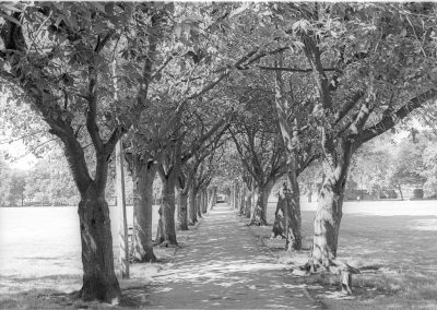 Black & White Photograph, Walk 2 Meadows