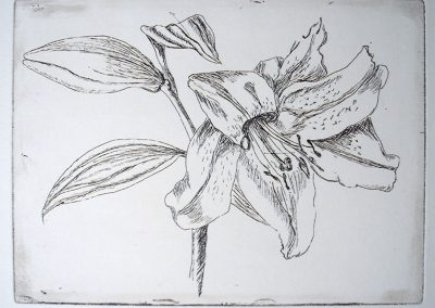 Lily, Etching