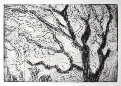 Treetop, Etching