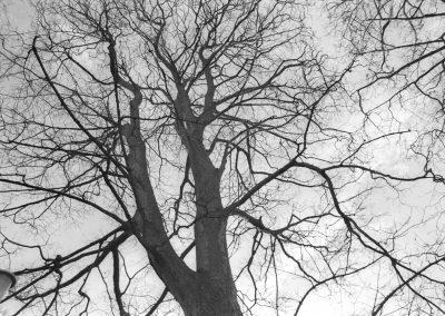 Soosan-Danesh-Black&White-Photograph-Cramond-2